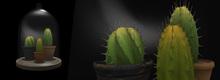 *MW* Glass cloche Cactus