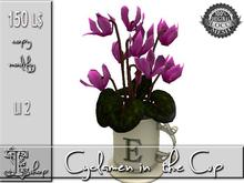 Cyclamen in the Cup MC