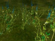 Summer Grass where wind runs_blue