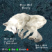 Snow Wolf Sleeping