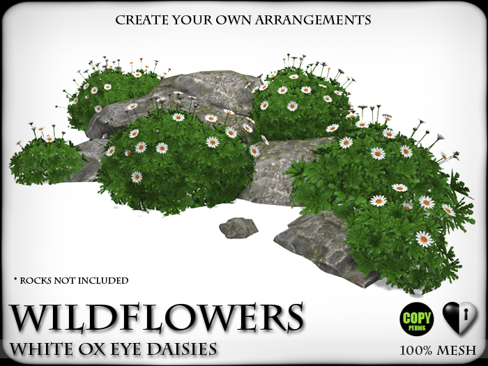 WILD FLOWERS - Ox Eye Clusters and Bushes