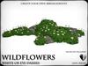 Wildflowers  ox eye daisies   ref 2