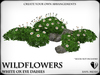 Wildflowers  ox eye daisies   ref 3