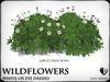 Wildflowers  ox eye daisies   ref 4