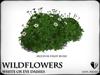 Wildflowers  ox eye daisies   ref 5