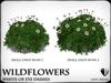 Wildflowers  ox eye daisies   ref 6