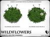 Wildflowers  ox eye daisies   ref 7