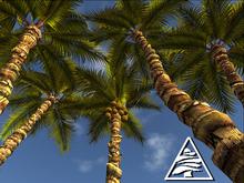 Palm trees 3D MODIFY COPY
