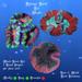 Sponge Coral Set