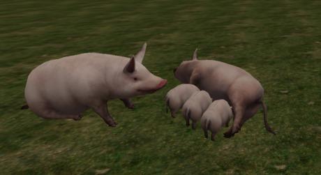 pig an piglets 5prim