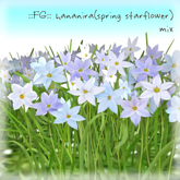 ::FG:: hananira (spring starflower) / MIX / copy
