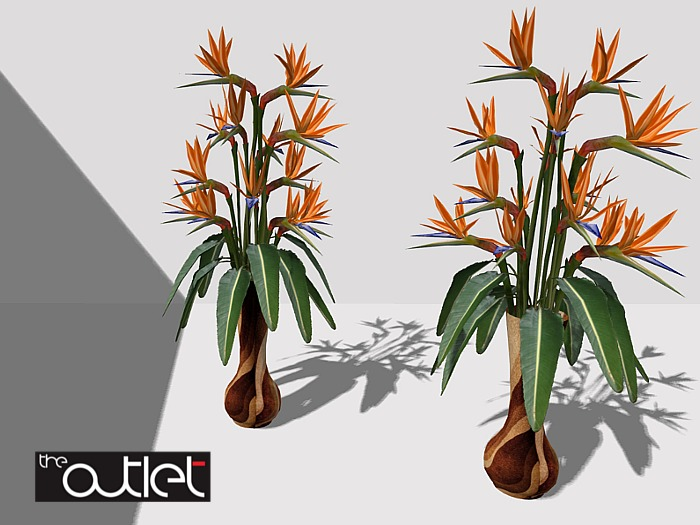 CO Evan Potted Flowers