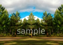 Forest (daytime) seamless panorama texture