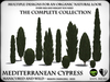 TREES - Mediterranean Cypress - The Complete Collection