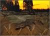 African aligator pond 002